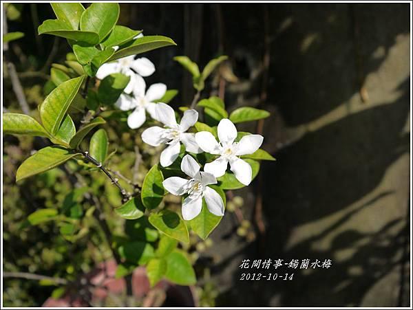 2012-11-鍚蘭水梅1