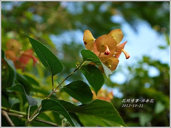 2012-11-洋傘花4