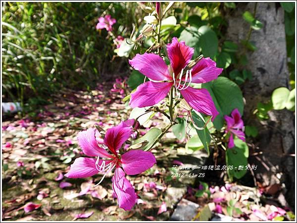 2012-11-艷紫荊4