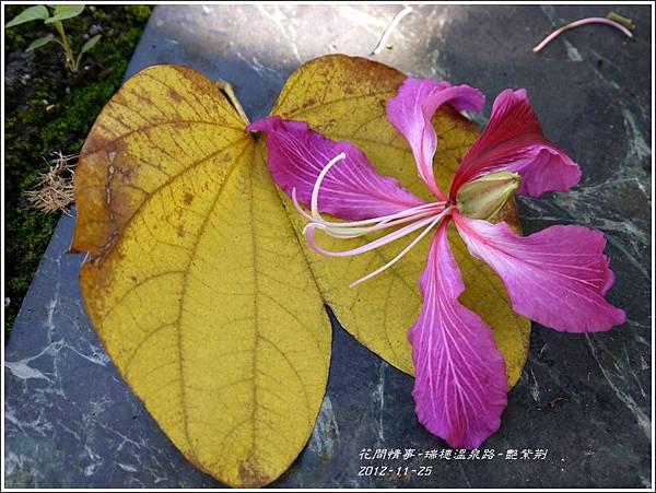 2012-11-艷紫荊9