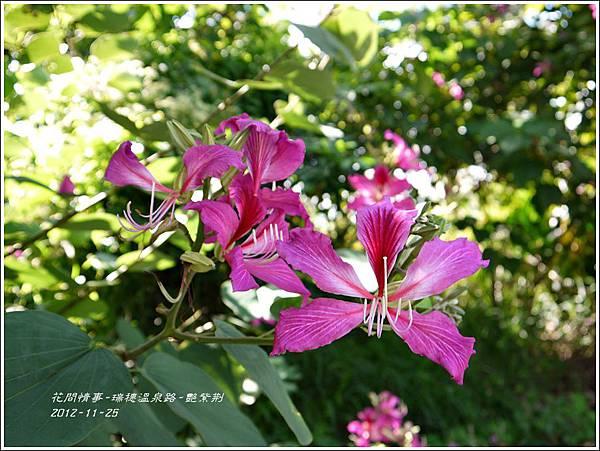 2012-11-艷紫荊10