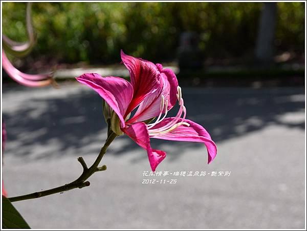 2012-11-艷紫荊19