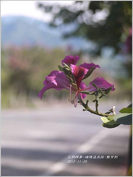 2012-11-艷紫荊23