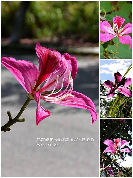 2012-11-艷紫荊25