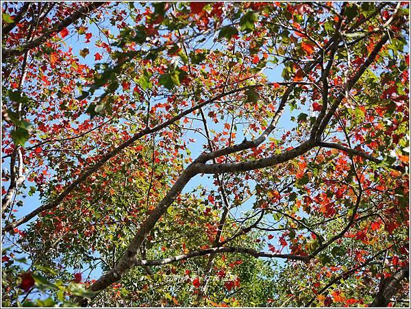 2012-12-紅葉溫泉25