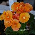 2013-01-鬱金香花園25