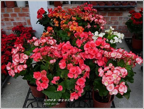 2013-01-鬱金香花園5