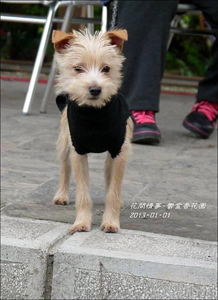2013-01-鬱金香花園8