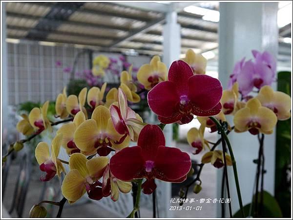 2013-01-鬱金香花園18