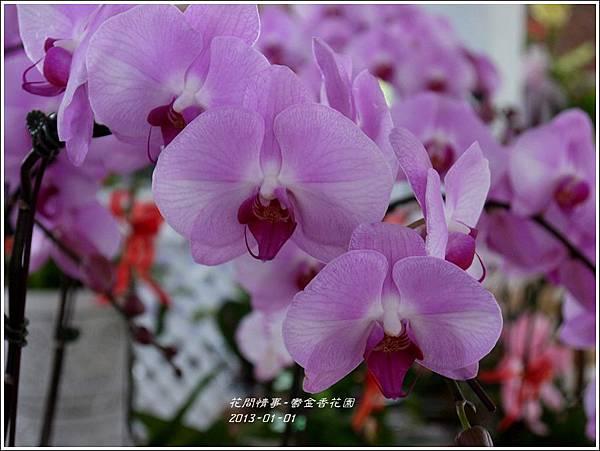 2013-01-鬱金香花園20