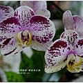 2013-01-鬱金香花園19