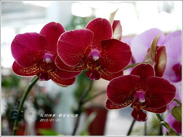 2013-01-鬱金香花園22