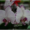 2013-01-鬱金香花園21