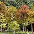 2012-12-落羽松之美1