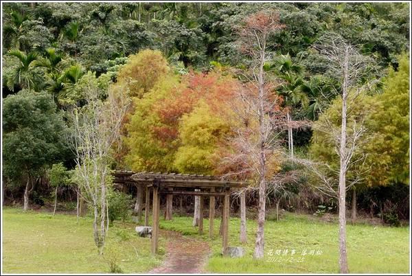2012-12-落羽松之美4