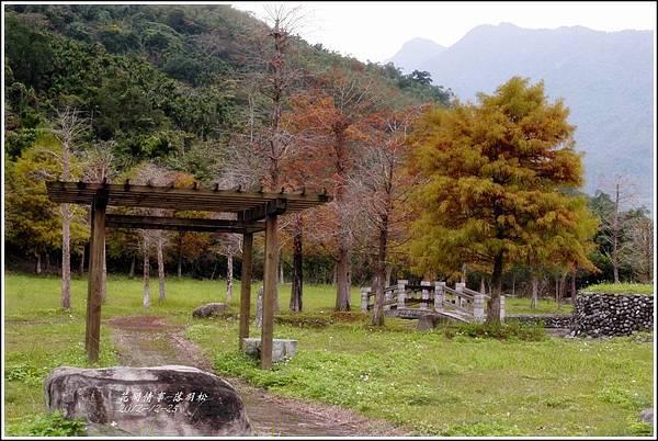2012-12-落羽松之美6