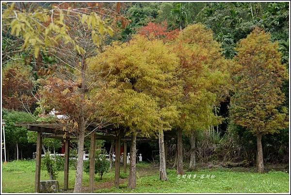 2012-12-落羽松之美9