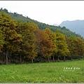 2012-12-落羽松之美10