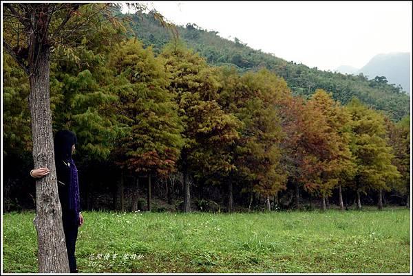 2012-12-落羽松之美14