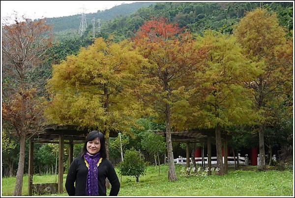 2012-12-落羽松之美16