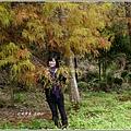 2012-12-落羽松之美17