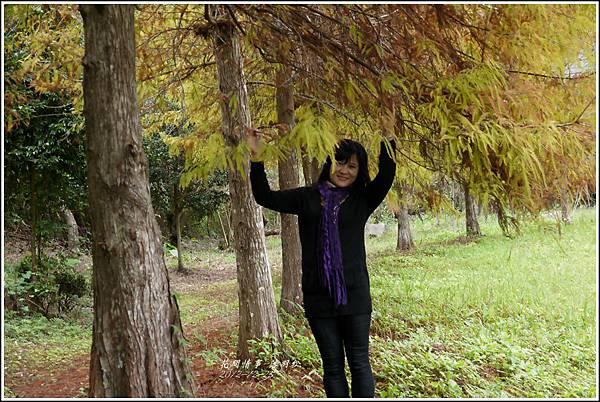 2012-12-落羽松之美18