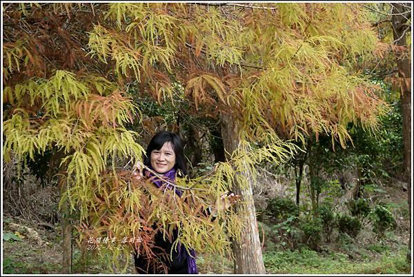 2012-12-落羽松之美22