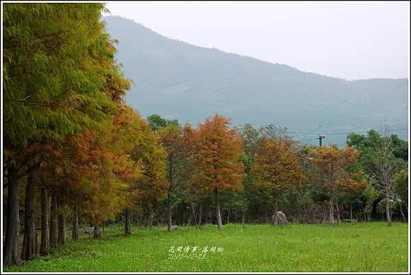 2012-12-落羽松之美23