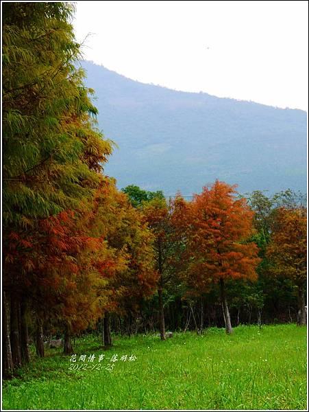 2012-12-落羽松之美24
