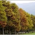 2012-12-落羽松之美25