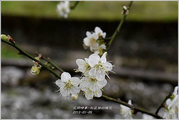 2013-01-梅花香2