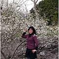 2013-01-梅花香7