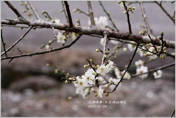 2013-01-梅花香18