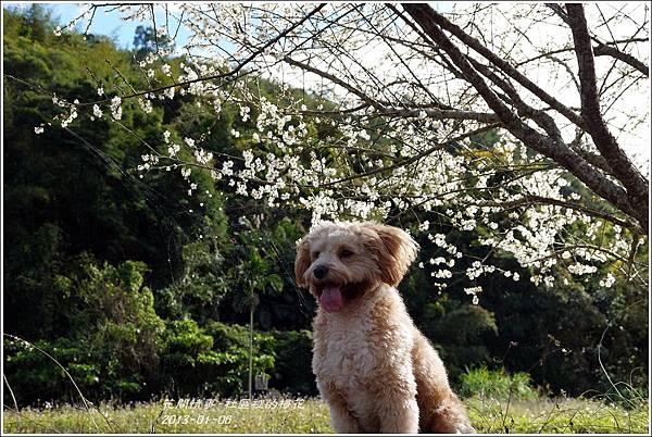 2013-01-梅花香21