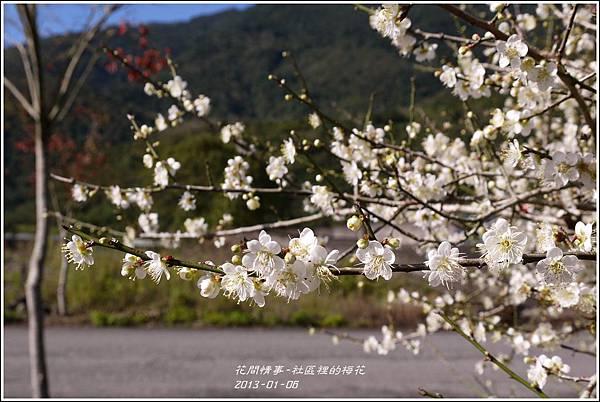 2013-01-梅花香29