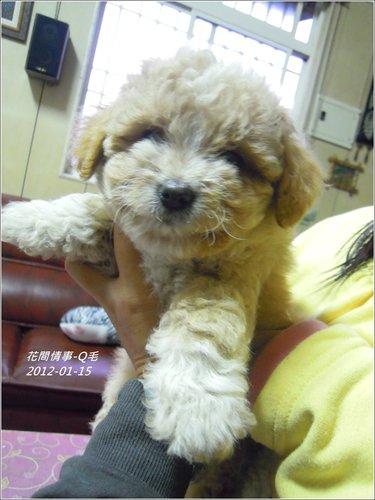 2013-01-毛小孩15