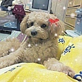2013-01-毛小孩19