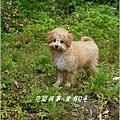 2013-01-毛小孩22