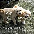 2013-01-毛小孩23