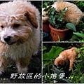 2013-01-毛小孩24