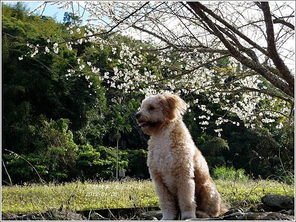 2013-01-毛小孩小Q9
