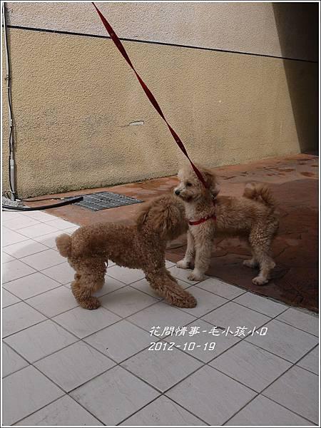 2013-01-毛小孩小Q12