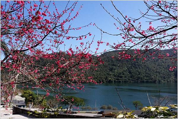2013-01-現櫻情-玉山神學院4