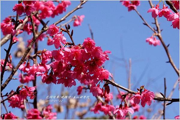 2013-01-現櫻情-玉山神學院9