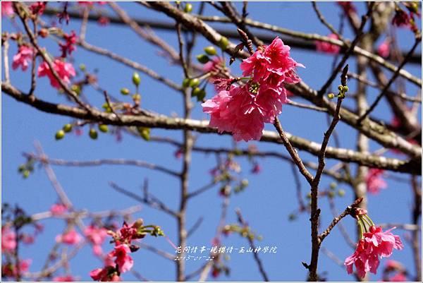 2013-01-現櫻情-玉山神學院23