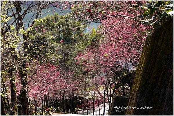 2013-01-現櫻情-玉山神學院24