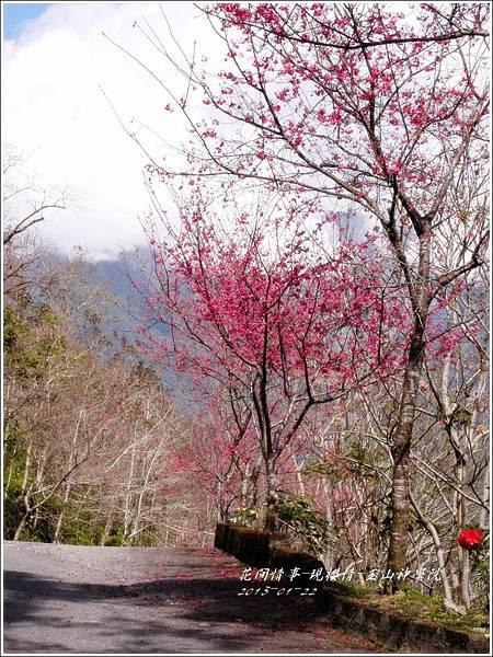 2013-01-現櫻情-玉山神學院29