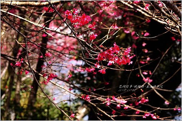 2013-01-現櫻情-玉山神學院34