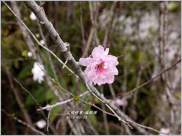 2012-01-攝影課6
