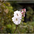 2012-01-攝影課7